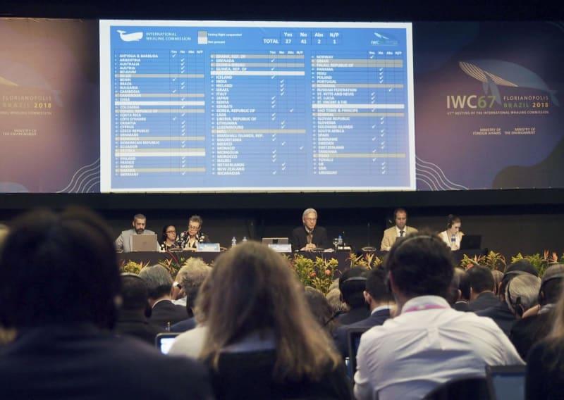 日本、IWC脱退を警告 総会、商業捕鯨の再開否決