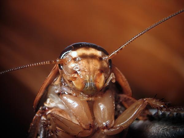 篠原かをり】人間はゴキブリの「本当の顔」を知らない