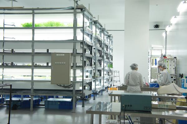 アローインダストリーズの野菜工場。